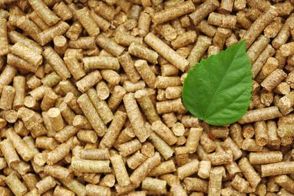 Jak powstaje pellet drzewny? Poznaj 4 najważniejsze etapy